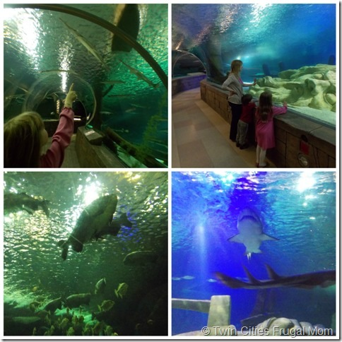 Sea Life Minnesota Aquarium At The Mall Of America And 6 Ways To Save On Admission Twin Cities