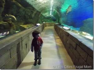 Sea Life Minnesota Aquarium At The Mall Of America And 6